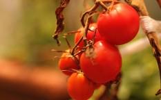 150205_vegetable_01