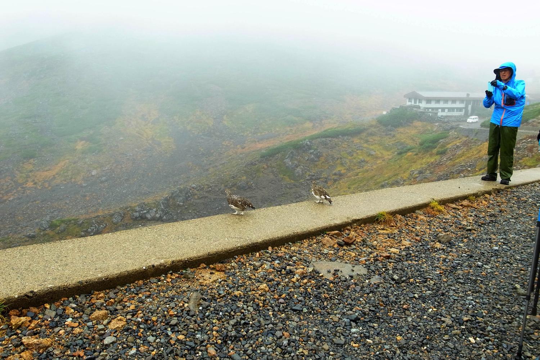雨の中野乗鞍岳登山。途中に雷鳥も発見!