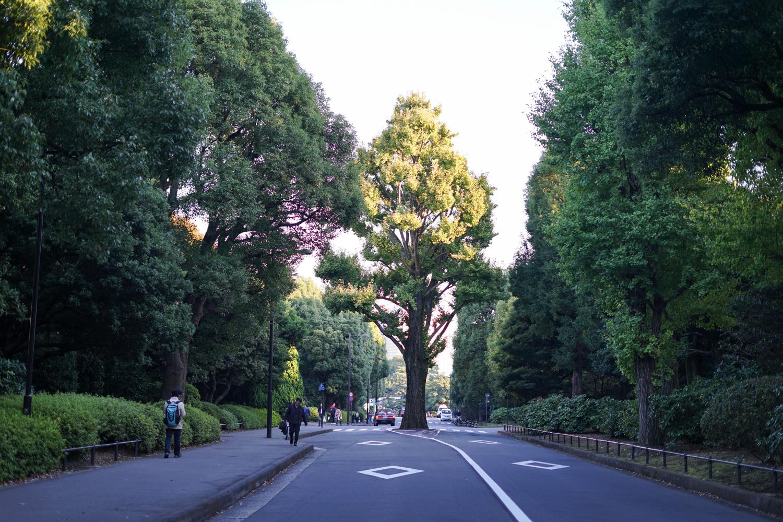 道路の真ん中の大木