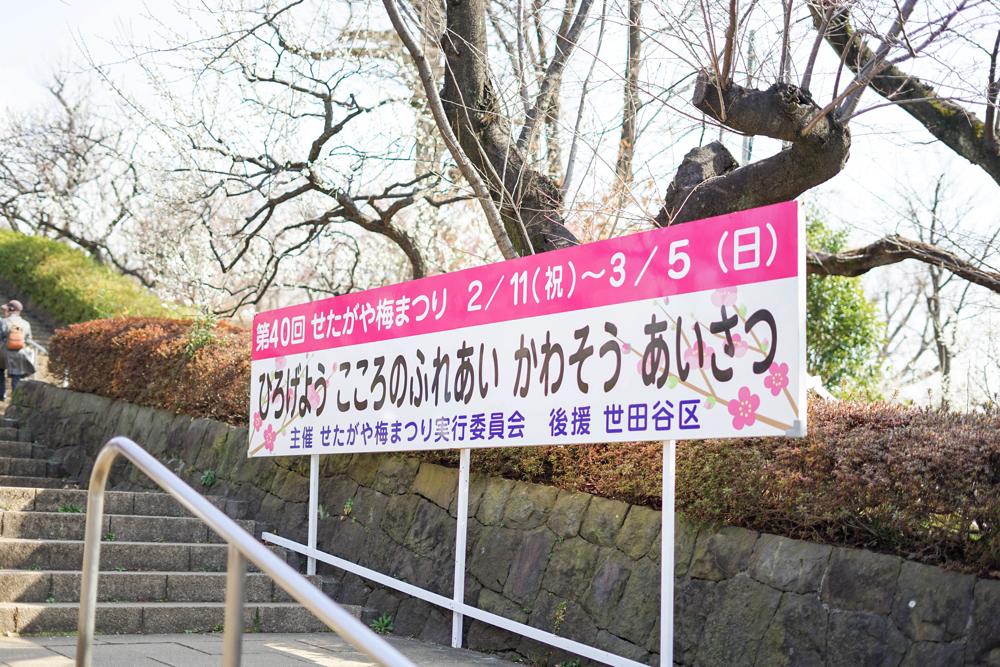梅ヶ丘 羽根木公演 梅まつり