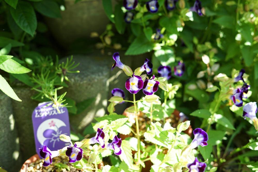 170928 veranda homegrown tools recommended 01