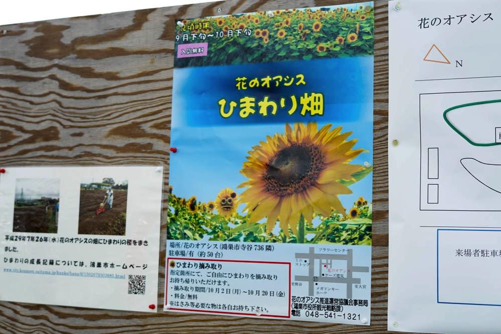171002 kounosu himawari 02