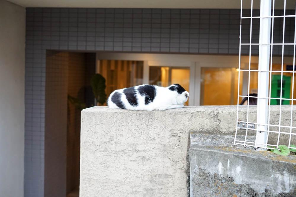 171104 shibamata yanaka nezu 32