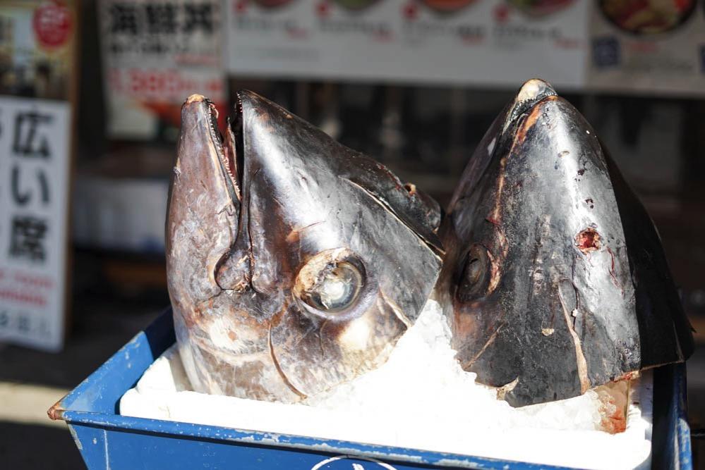 171203 tsukiji photowalk 10