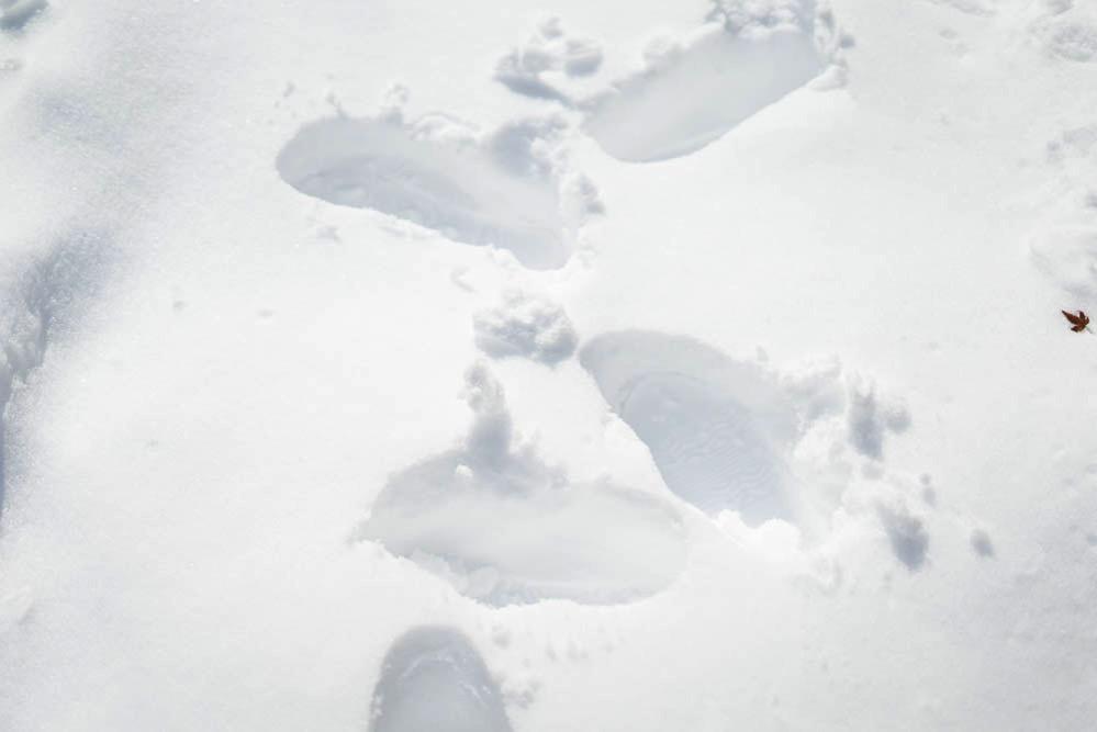 180122 snow day jan 2018 08