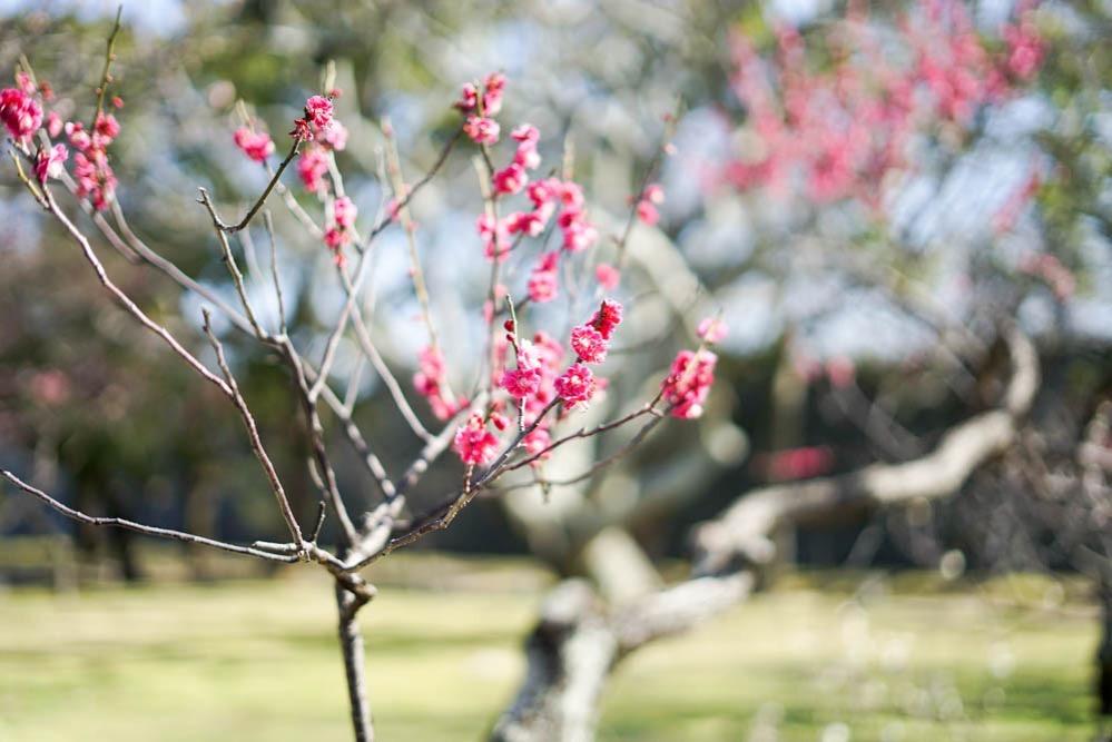 180312 fukuoka ohori park 03