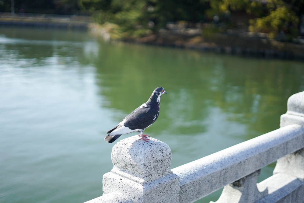 180312 fukuoka ohori park 20