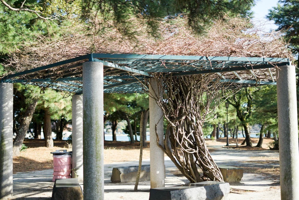 180312 fukuoka ohori park 23