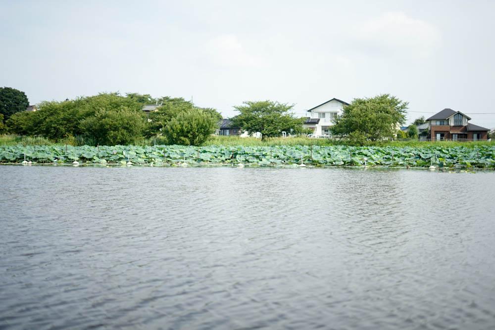 180723 tatebayashi lotus boat 10
