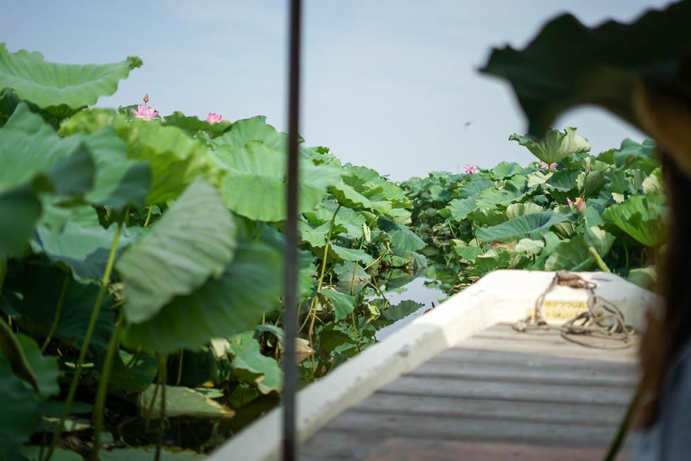 180723 tatebayashi lotus boat 19