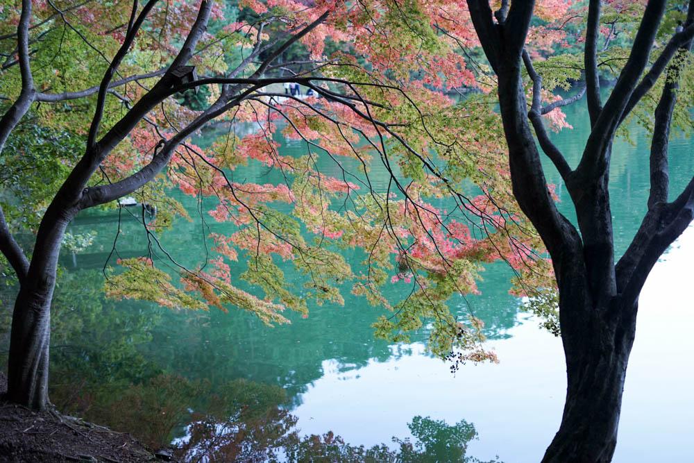 181028 yamanashi fujimi resort 52