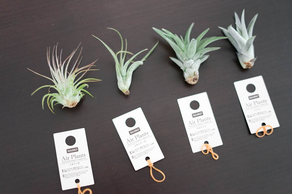 190115 start raising up airplants 01