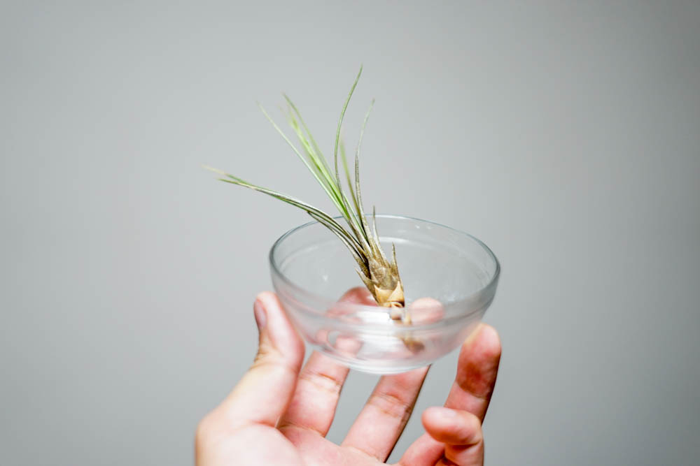 190115 start raising up airplants 02